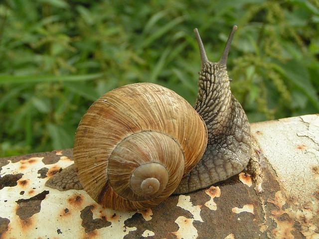 snails-214765_640