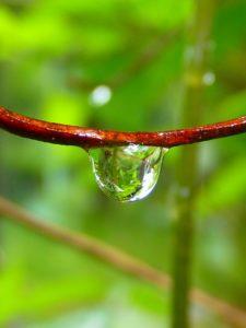 drop-of-water-7721_640